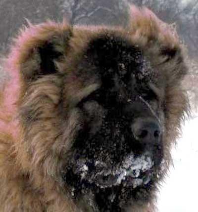 русский медведь фото
