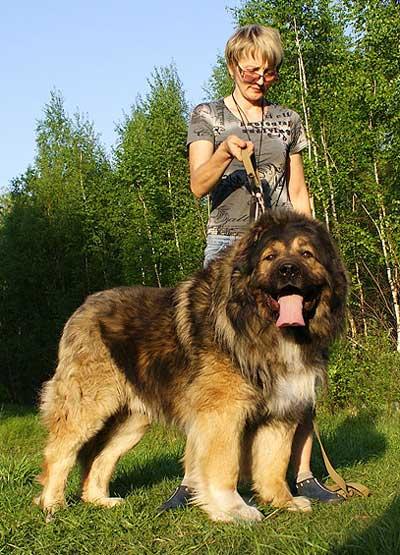 русский медведь фото кс 1.6