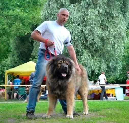 форум кавказских овчарок питомник цкаро синтетическое термобелье только