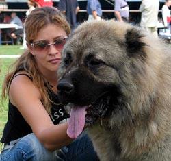 http://security-dog.org/pitomnik/katalog_kennel/foto/polina.jpg