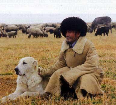 Бой Туркменских Алабаев